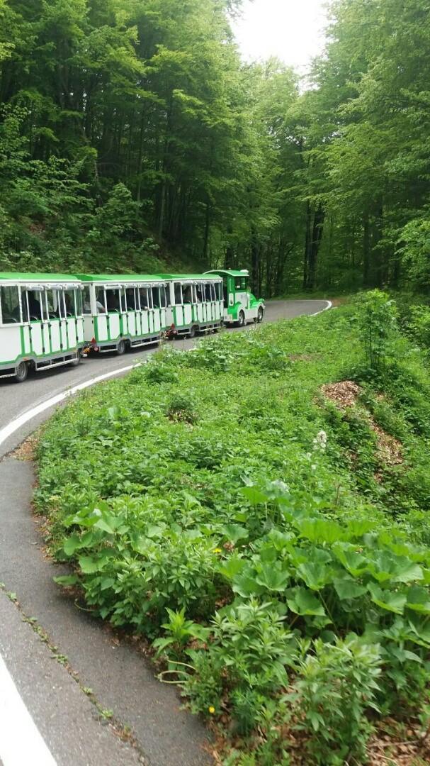 Vožnjа turističkim vozom u NP Biogradska gora